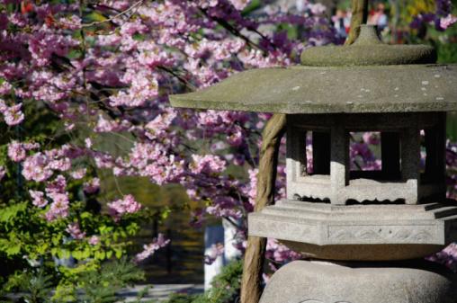 Cherry Blossom Festival「春には、東洋風庭園」:スマホ壁紙(10)