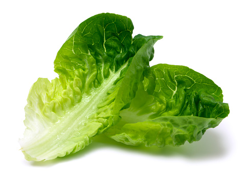 Crop - Plant「Romaine lettuce leaf」:スマホ壁紙(18)