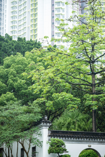 Ornamental Garden「Kowloon Walled City Park and Apartments」:スマホ壁紙(8)