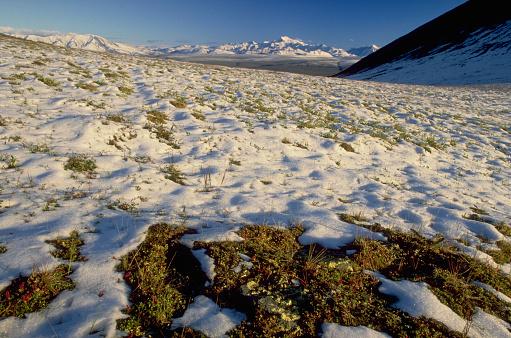 Arctic National Wildlife Refuge「August Snow on Tundra」:スマホ壁紙(17)