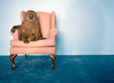 Good Posture「Baboon in armchair」:スマホ壁紙(3)