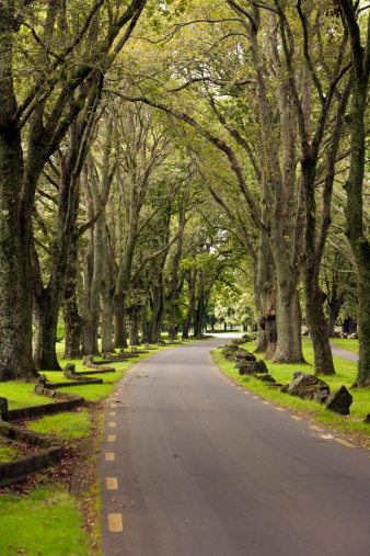 Footpath「Avenue of trees, Cornwall Park.」:スマホ壁紙(19)