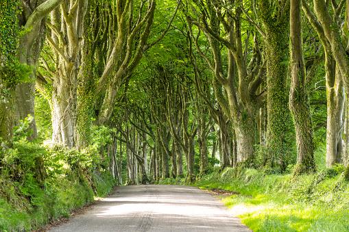 Avenue「Avenue of trees on the edge of Dartmoor, UK.」:スマホ壁紙(19)