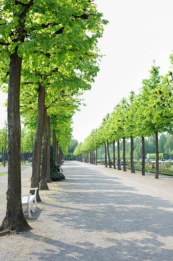 Avenue「Avenue of Trees in a Formal Garden」:スマホ壁紙(12)