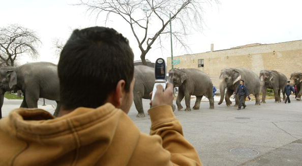 Tim Boyle「Elephants Parade Through Windy City As Circus Comes To Town」:写真・画像(10)[壁紙.com]