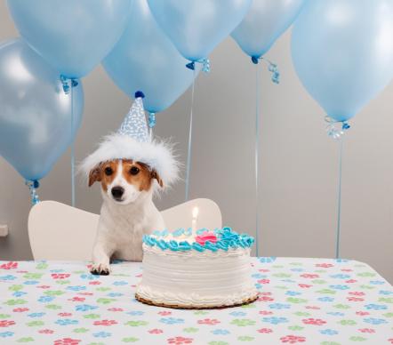 Surprise「Birthday Dog」:スマホ壁紙(10)