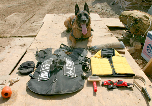 Making A Face「A military police dog sits beside his issued protective gear.」:スマホ壁紙(6)