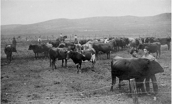 Barbed Wire「Fenced In Cattlemen」:写真・画像(5)[壁紙.com]