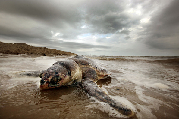 Animal Wildlife「One Year Anniversary Of BP Oil Spill Approaches」:写真・画像(9)[壁紙.com]