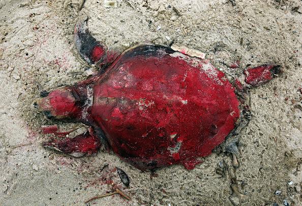 Animal Wildlife「One Year Anniversary Of BP Oil Spill Approaches」:写真・画像(8)[壁紙.com]