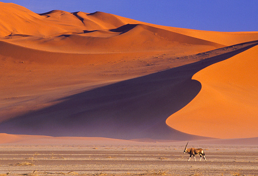 Namib-Naukluft National Park「Oryx and Red Dunes」:スマホ壁紙(8)