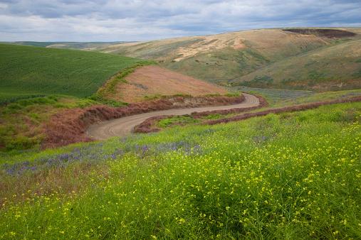Hairpin Curve「USA, Eastern Washingon, dirt ride and wild flowers」:スマホ壁紙(10)