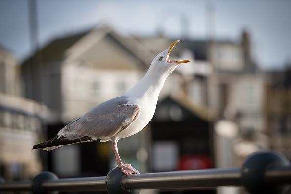Coastline「Cornish Town Holds Second Home Referendum」:写真・画像(11)[壁紙.com]