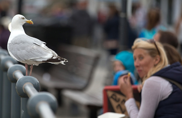 Water's Edge「Seagull Attacks Being Reported From Coastal Towns This Summer」:写真・画像(4)[壁紙.com]