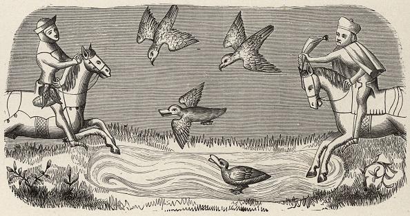 Hawk - Bird「Duck Hunting」:写真・画像(11)[壁紙.com]