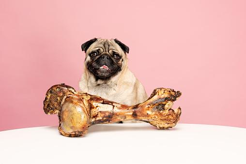 Eating「Bones for Dogs Can Be Dangerous」:スマホ壁紙(9)