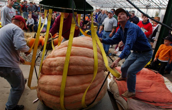 Pumpkin「Giant Pumpkins Weigh In At Growers' Competition」:写真・画像(14)[壁紙.com]