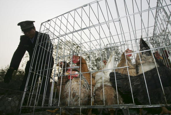 Chicken Meat「China Urges Vigilance Against Bird Flu And SARS」:写真・画像(19)[壁紙.com]
