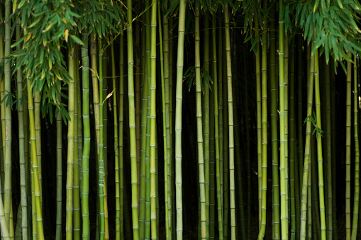 Bamboo Grove「Green bamboo forest with stalks and leaves」:スマホ壁紙(19)