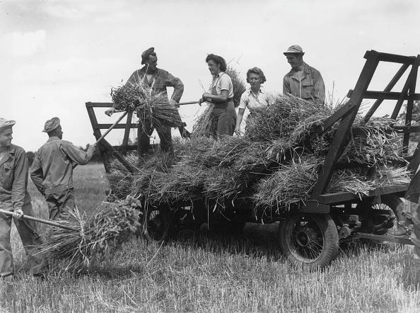 Grass Family「Wheat Reapers」:写真・画像(10)[壁紙.com]