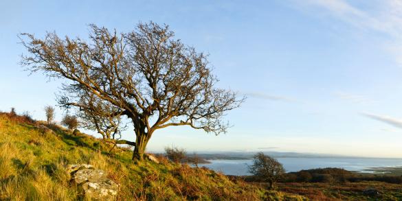 Hawthorn「English Lake District: Hawthorn panorama」:スマホ壁紙(16)