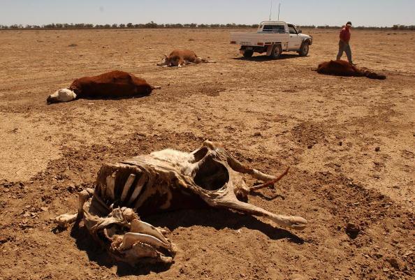 オーストラリア「Outback Australia in drought」:写真・画像(10)[壁紙.com]