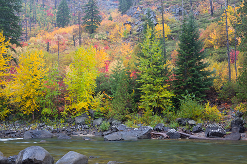 ウェナチー国有林「Wenatchee River in autumn, Tumwater Canyon, Wenatchee National Forest, Washington State, USA」:スマホ壁紙(10)
