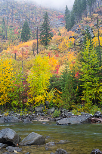 ウェナチー国有林「Wenatchee River in autumn, Tumwater Canyon, Wenatchee National Forest, Washington State, USA」:スマホ壁紙(8)