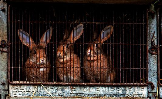 うさぎ「Rabbits in a cage」:スマホ壁紙(0)