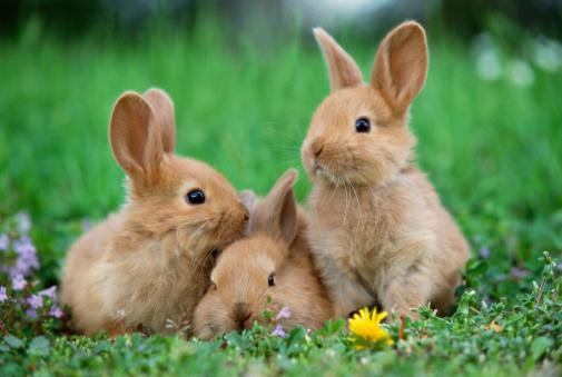 Baby animal「Rabbits in meadow」:スマホ壁紙(12)