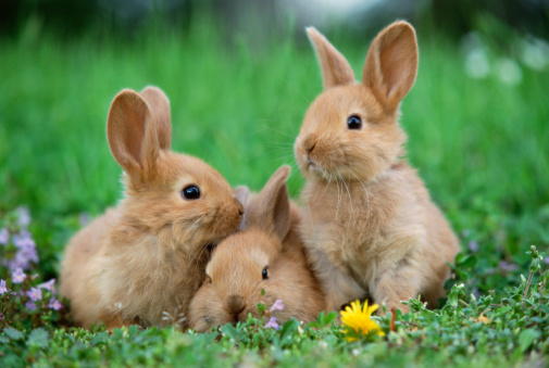 Rabbit「Rabbits in meadow」:スマホ壁紙(7)