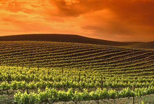 1990-1999「Wine country scene」:スマホ壁紙(0)