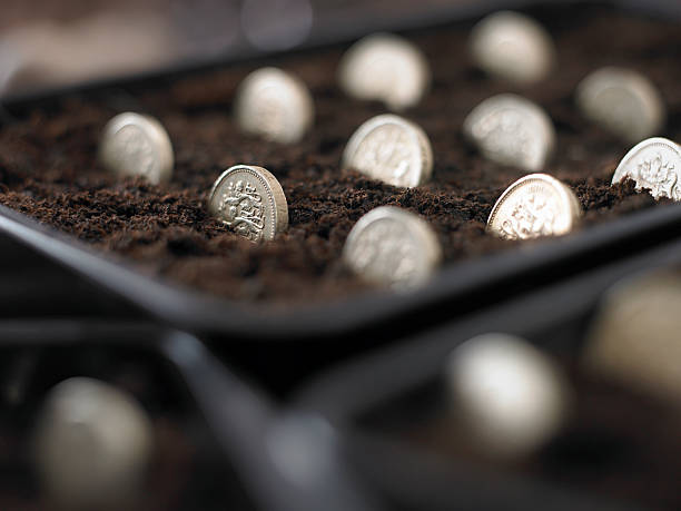Pound Coins Planted in Seed Tray:スマホ壁紙(壁紙.com)