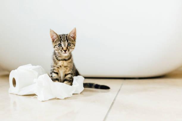 Eight week old tortoiseshell kitten playing with toilet roll:スマホ壁紙(壁紙.com)