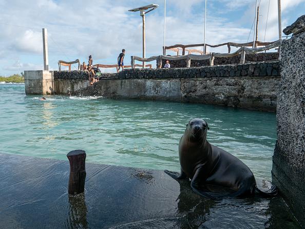 世界遺産「Nature and Human Lives Seek Equilibrium In Galapagos」:写真・画像(12)[壁紙.com]