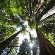 温帯雨林壁紙の画像(壁紙.com)