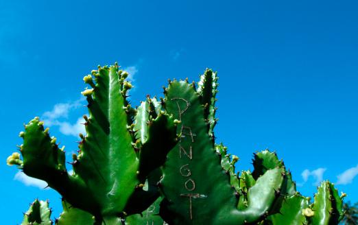 太陽の光「Cactus With Scribble on Its Skin」:スマホ壁紙(6)