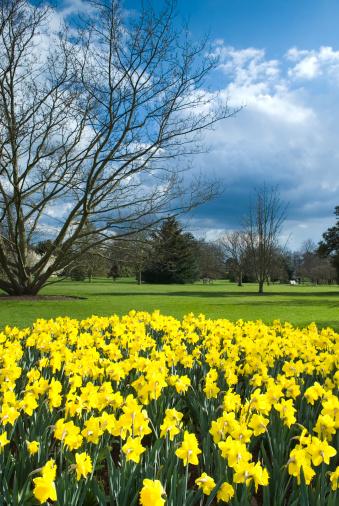 Daffodil「Daffodils world (Garden Image) - XIV」:スマホ壁紙(8)