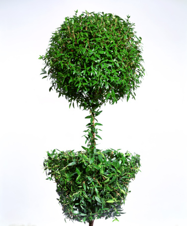Art And Craft「Green topiary」:スマホ壁紙(11)