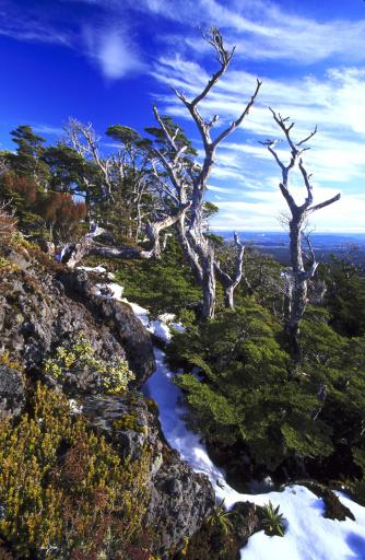 New Zealand「near summit of mt ruapeliu」:スマホ壁紙(0)