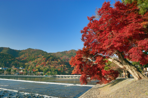 秋+京都「Togetsu bridge in Fall, Kyoto Prefecture, Japan」:スマホ壁紙(5)