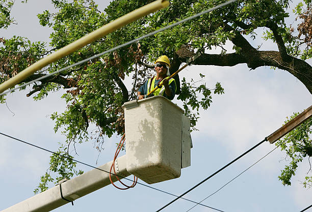 New Orleans Still Struggles One Month After Katrina:ニュース(壁紙.com)