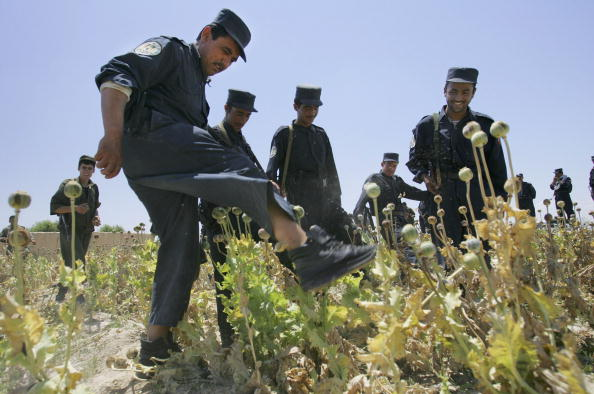 Oriental Poppy「Afghan Police Destroy Poppie Field In Anti-Drug Raids」:写真・画像(17)[壁紙.com]