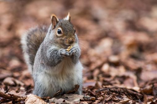 リス「A Squirrel On The Ground Holding Something In It's Paws」:スマホ壁紙(2)