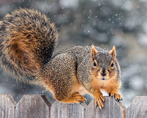 Squirrel on fence:スマホ壁紙(壁紙.com)