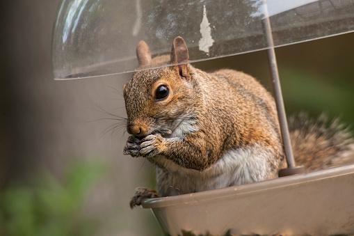 Squirrel「Squirrel on bird feeder, Ponte Vedra Beach, Florida」:スマホ壁紙(7)