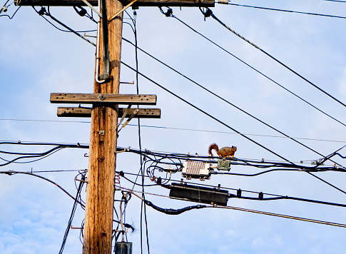 Squirrel「Squirrel on top of electrical wires」:スマホ壁紙(13)