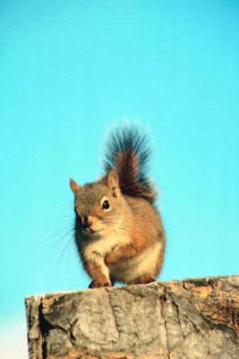 Squirrel「Squirrel on tree stump」:スマホ壁紙(3)