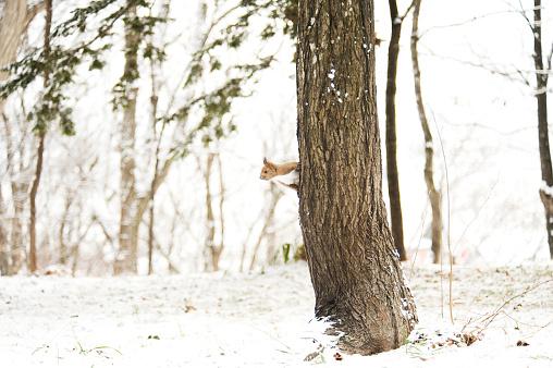 リス「Squirrel on Tree in Winter」:スマホ壁紙(17)