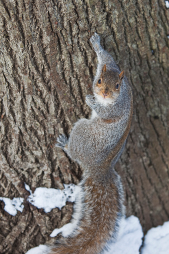 Squirrel「Squirrel on tree trunk in Central Park.」:スマホ壁紙(0)